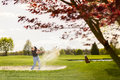 Male golfer playing from sand bunker hazard. Royalty Free Stock Photo