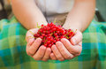 Male hands holding red currant fruit fresh air Royalty Free Stock Photo
