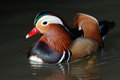 Male Mandarin Duck Royalty Free Stock Photo