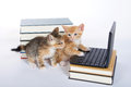 male orange tabby kitten looking at miniature laptop type comput Royalty Free Stock Photo