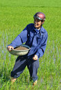 Male rice paddy worker working in the field Stock Photography