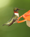 Male Ruby-throated Hummingbird at Feeder Royalty Free Stock Photo