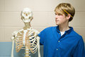 Male student stood with a human skeleton Royalty Free Stock Photo