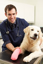 Male Veterinary Surgeon Treating Dog In Surgery Royalty Free Stock Photos