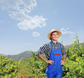 Male vintner posing at vineyard Royalty Free Stock Photography