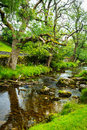 Malham Beck, Yorkshire Dales, England Royalty Free Stock Photo