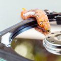 Malicious computer worm . Royalty Free Stock Photo