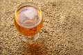 Malt and beer glass full of light standing on barley grains Royalty Free Stock Images
