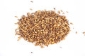 Malt grains close photo up of Royalty Free Stock Photos