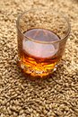 Malt and whiskey tumbler glass with standing on barley grains Royalty Free Stock Photo