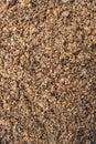 Malted barley grains Royalty Free Stock Photo