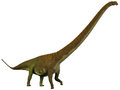 Mamenchisaurus hochuanensis profile was a plant eating sauropod dinosaur from the late jurassic period of china Stock Image