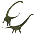 Mamenchisaurus youngi was a plant eating sauropod dinosaur from the late jurassic period of china Stock Images