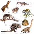 Mammals of south america on white background Stock Photography