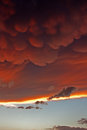 Mammatus clouds at sunset ahead of violent thunderstorm forming severe Royalty Free Stock Photo