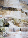 Mammoth hot spring terraces the in yellowstone national park Royalty Free Stock Image