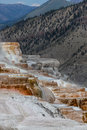 Mammoth hot springs colorful cascading down a mountain side with steam rising and mountain landscape background at yellowstone Stock Photography