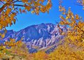 Mammoth mountain area in the fall colors were at their peak and golden leaves framed nicely there wasn t a cloud sky that day and Stock Images