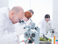 Man analyzing under microscope side view of men in chemistry lab and another three researchers on the background Royalty Free Stock Photography