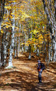 Man in autumn forest Stock Photography