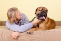 Man with big dog young at home playing a bullmastiff positively laugh Stock Images