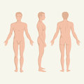 Man body anatomy front back and side standing vactor human pose Royalty Free Stock Photo