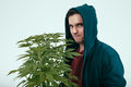 Man with cannabis plant Royalty Free Stock Photo