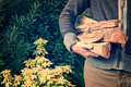 Man carrying firewood logs Royalty Free Stock Photo
