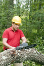 Man chain saw fallen tree Royalty Free Stock Photo