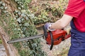 Man with chainsaw pruning a tree in day light Stock Image
