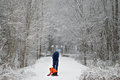 Man and child in snowy park rear view of young son walking on snow covered pathway between trees winter Royalty Free Stock Image