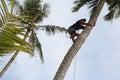 Man climbing coconut tree. Royalty Free Stock Photo