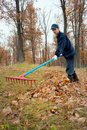A man collects in a grove of leaves Royalty Free Stock Photos