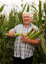 Man in corn field Royalty Free Stock Photo