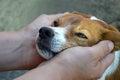 A man cuddling his dog Royalty Free Stock Photo
