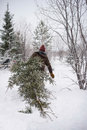 Man cuts tree Royalty Free Stock Photo