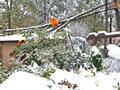 Man cutting fallen tree with chainsaw Royalty Free Stock Photography