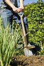 Man digging in vegetable garden Stock Photography