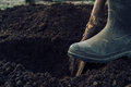 Man digs a hole unrecognizable by shovel in garden Stock Photography
