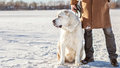 Man and dog central asian shepherd walk in the park Royalty Free Stock Photos