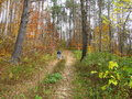 Man dog walking in woods fall foliage the forest autumn foliage Stock Images