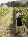 A man drinking wine at a vineyard Royalty Free Stock Photos