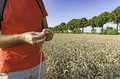 A man with an ear of wheat standing in the field Royalty Free Stock Photo