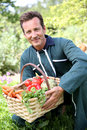 Man farmer collecting fresh vegetables Royalty Free Stock Photo