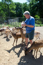 Man feeding deer Royalty Free Stock Photography