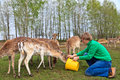 Man feeding deers at the farm Stock Images
