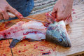 Man fillets fresh fish. Royalty Free Stock Photo