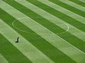 Man on the football pitch maintaining grass Royalty Free Stock Images
