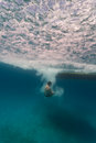 Man free diving from boat on coral reefs in hol ch chan november chan marine reserve off coast of belize Stock Image