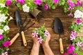 Man or gardener holding a bunch of spring petunias